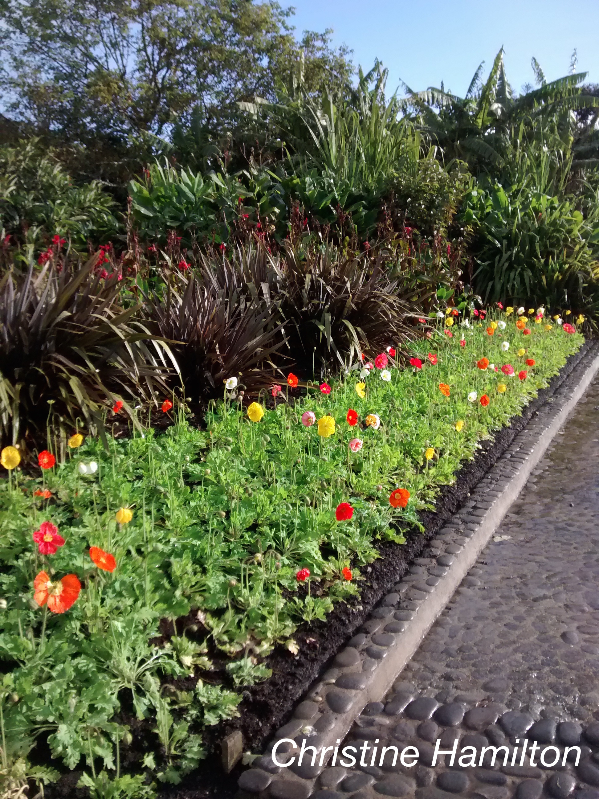 Garden Magic In New Zealand Slide Show 3 Guelph Wellington Master